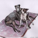 Greyhound & Boston Terrier playing - RGT