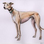 Dylan - Greyhound - RGT
