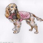 Leah - spaniel puppy