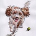 Milo - terrier