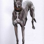 Mr Stagger Lee - Greyhound