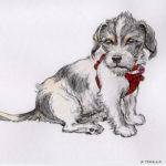 Teo - Rat Terrier