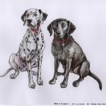 Rollo & Holly - Dalmatian & Labrador