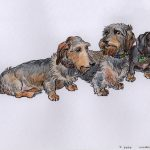3 Friends - Dachshunds