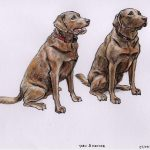 Toby & Hector - Labradors-brothers